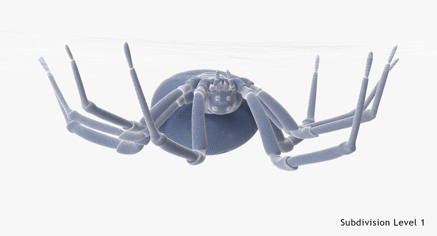 Black Widow - Hanging royalty-free 3d model - Preview no. 22
