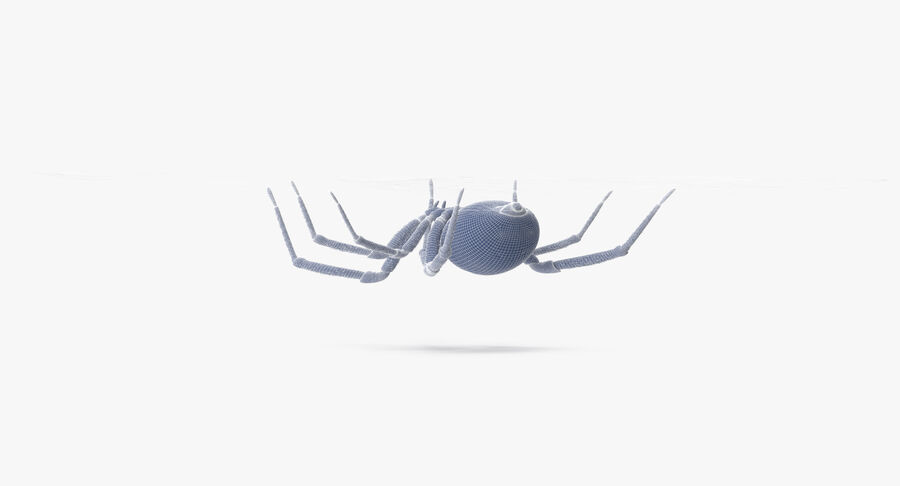 Black Widow - Hanging royalty-free 3d model - Preview no. 18
