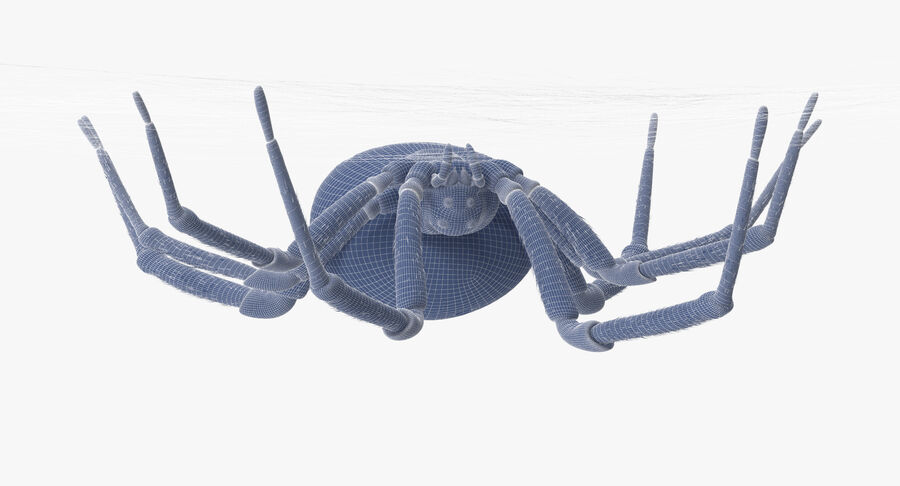 Black Widow - Hanging royalty-free 3d model - Preview no. 12