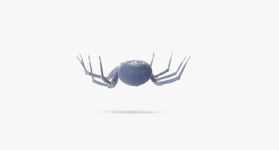 Black Widow - Hanging royalty-free 3d model - Preview no. 17
