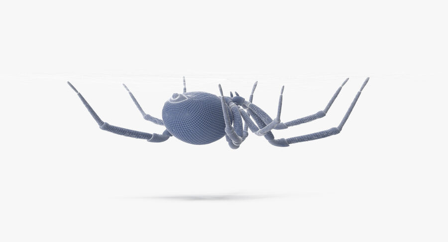 Black Widow - Hanging royalty-free 3d model - Preview no. 16