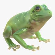 Raganella verde australiana 3d model