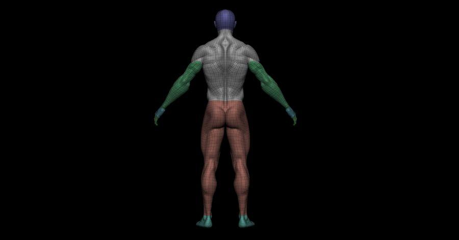 Der männliche Körper royalty-free 3d model - Preview no. 11