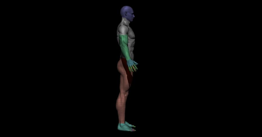 Der männliche Körper royalty-free 3d model - Preview no. 12
