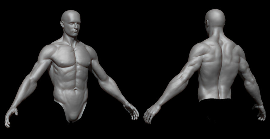 Der männliche Körper royalty-free 3d model - Preview no. 3