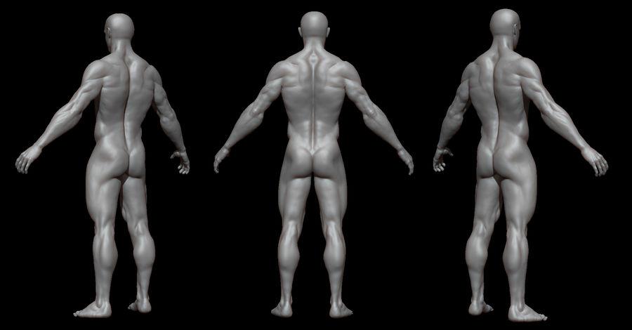 Der männliche Körper royalty-free 3d model - Preview no. 2