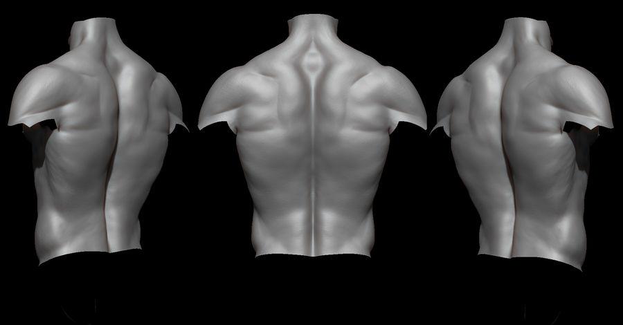 Der männliche Körper royalty-free 3d model - Preview no. 7