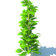 Cartoon_Tree 3d model