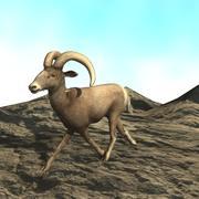 BIGHORN SHEEP 3d model