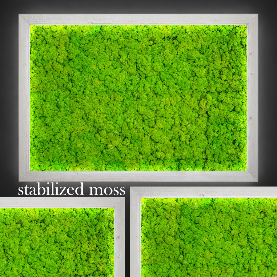 Fytowall moss LX royalty-free 3d model - Preview no. 1