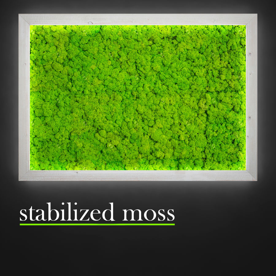 Fytowall moss LX royalty-free 3d model - Preview no. 3