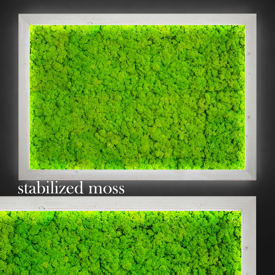 Fytowall moss LX royalty-free 3d model - Preview no. 4