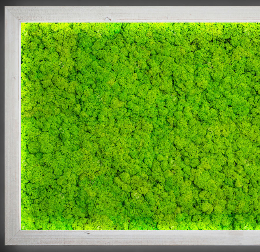 Fytowall moss LX royalty-free 3d model - Preview no. 2