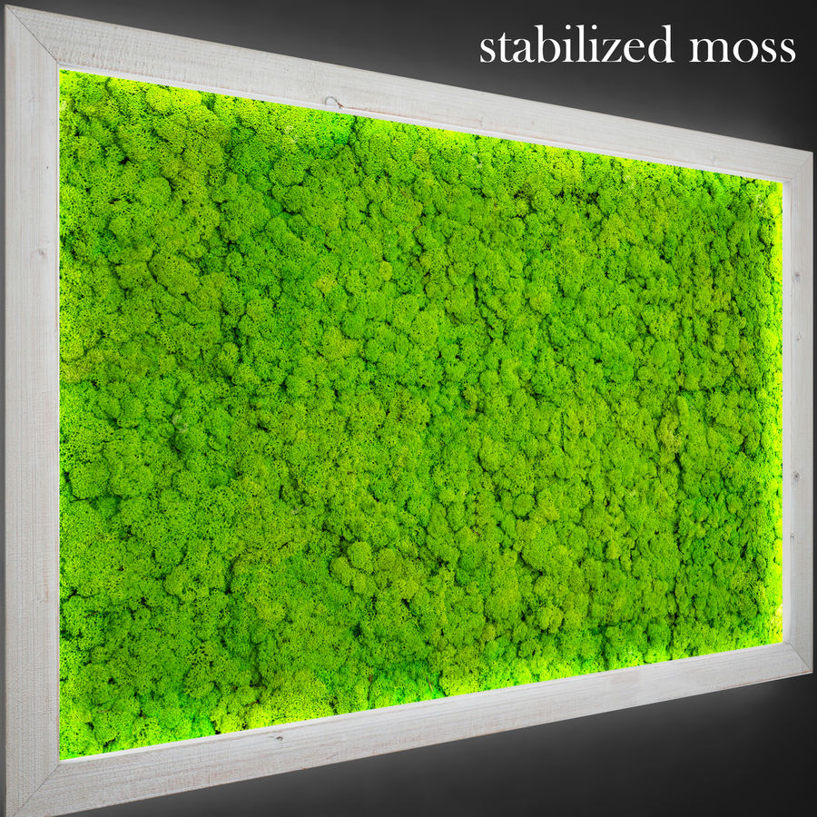 Fytowall moss LX royalty-free 3d model - Preview no. 5