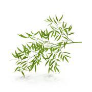 Bambus 3d model