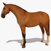 LowPoly Horse A (Buckskin) 3d model