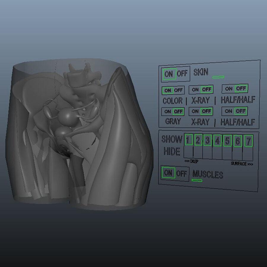 Le système de reproduction féminin royalty-free 3d model - Preview no. 7