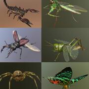 Kolekcja owadów 1 3d model