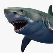 Grande squalo bianco 3d model