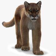 Puma Animated, Fur 3d model