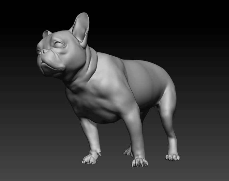 bulldog francese royalty-free 3d model - Preview no. 2