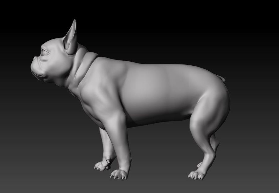 bulldog francese royalty-free 3d model - Preview no. 3
