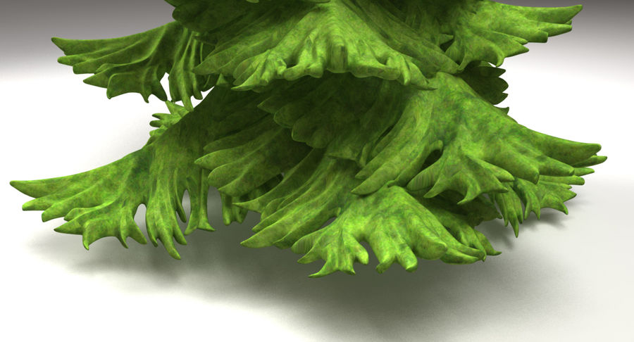 Fir Tree royalty-free 3d model - Preview no. 11