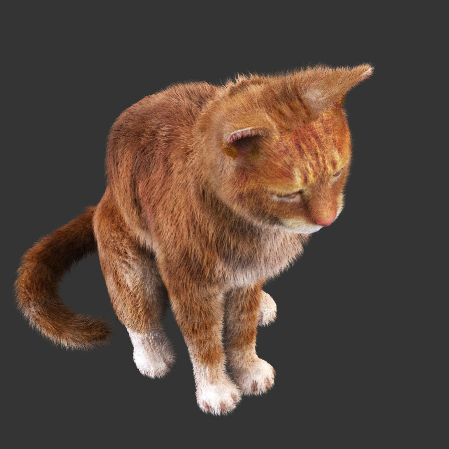 Cat Red Rigged royalty-free 3d model - Preview no. 3