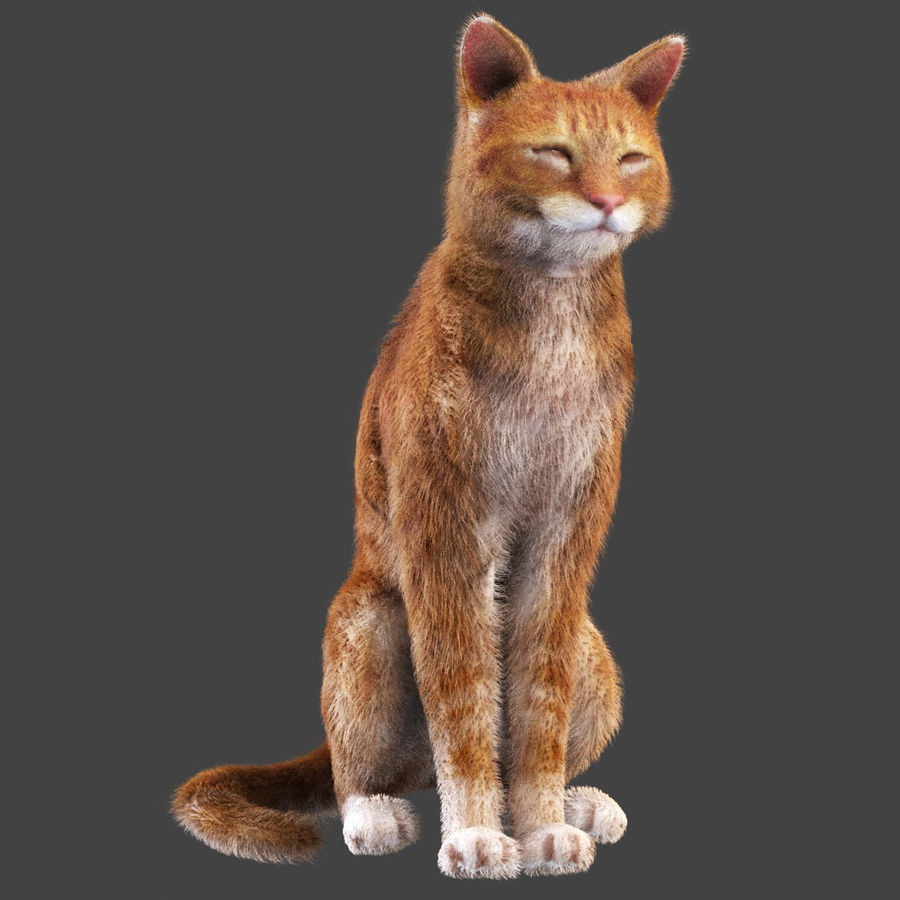 Cat Red Rigged royalty-free 3d model - Preview no. 5