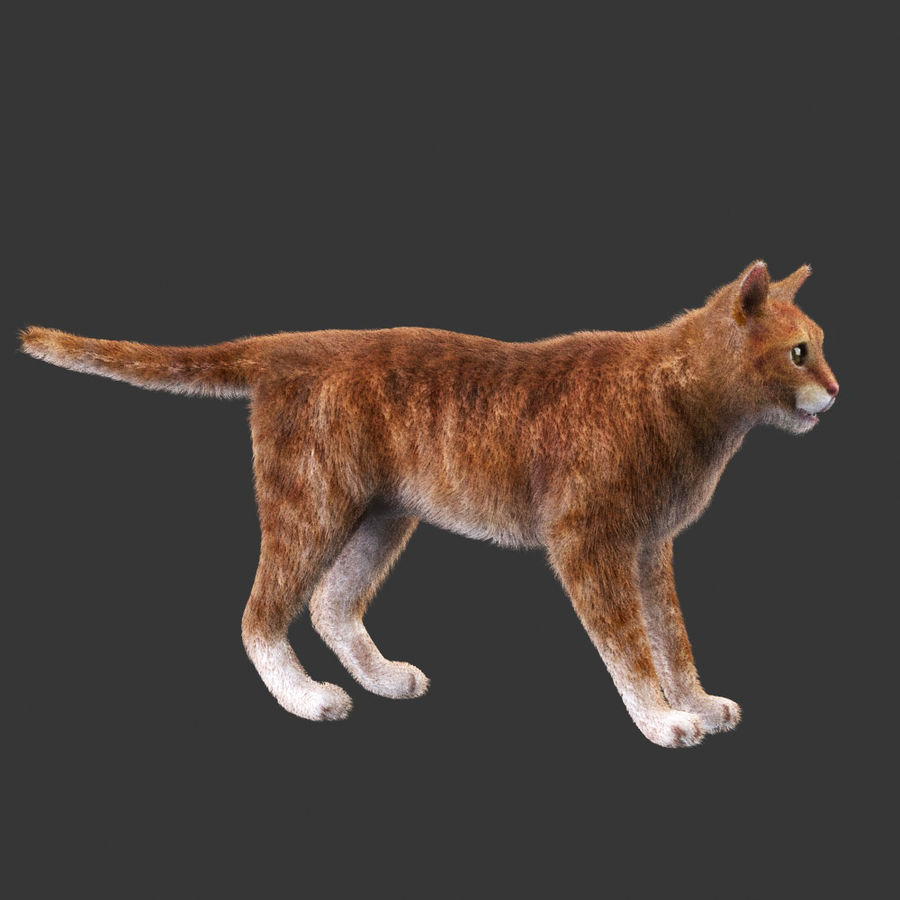 Cat Red Rigged royalty-free 3d model - Preview no. 1