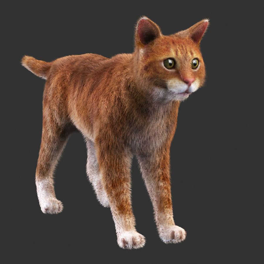 Cat Red Rigged royalty-free 3d model - Preview no. 6