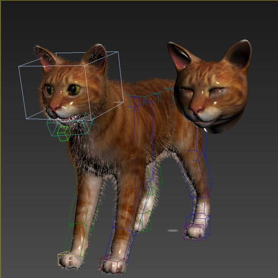 Cat Red Rigged royalty-free 3d model - Preview no. 10