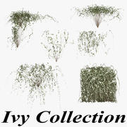 Ivy Collection 3d model