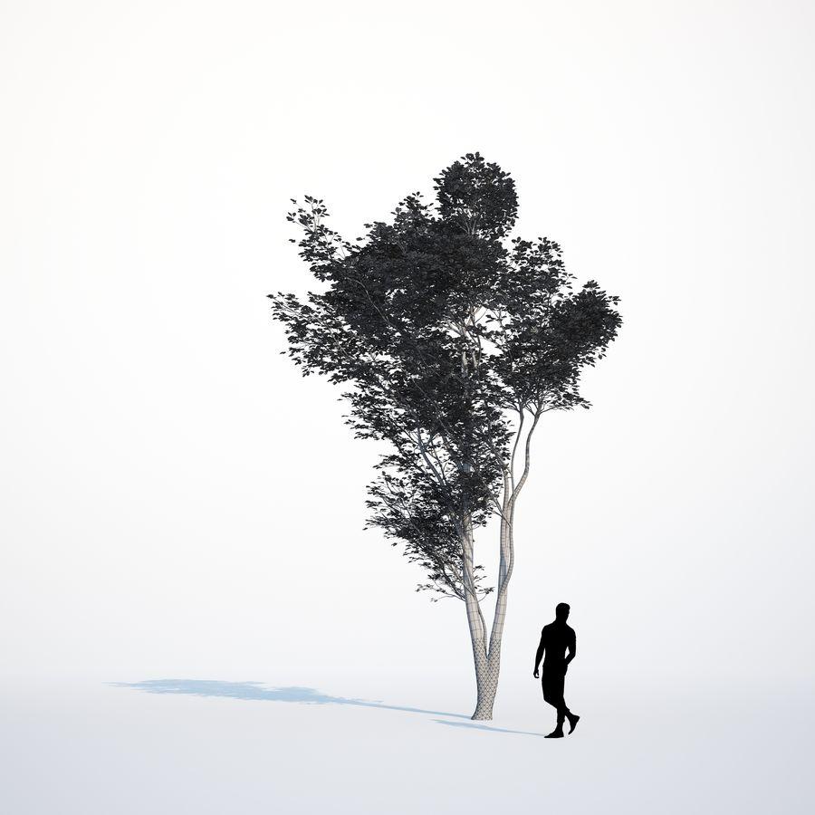 Harnbeam树(Carpinus Betulus)模型C. royalty-free 3d model - Preview no. 13