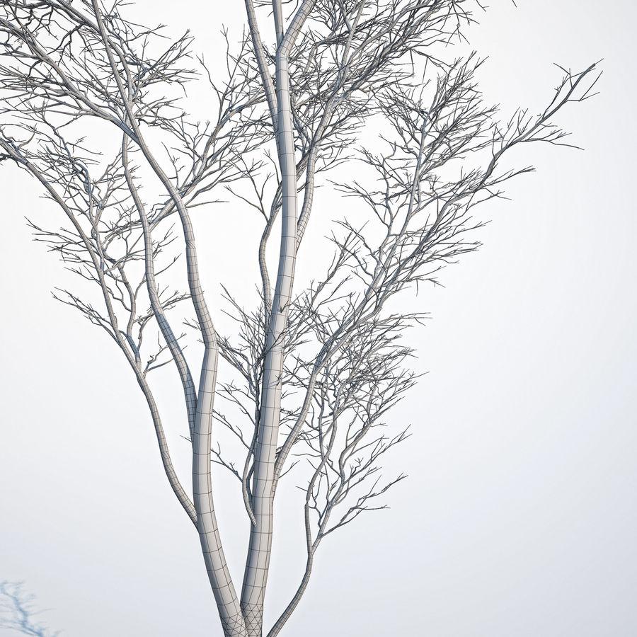 Harnbeam树(Carpinus Betulus)模型C. royalty-free 3d model - Preview no. 8
