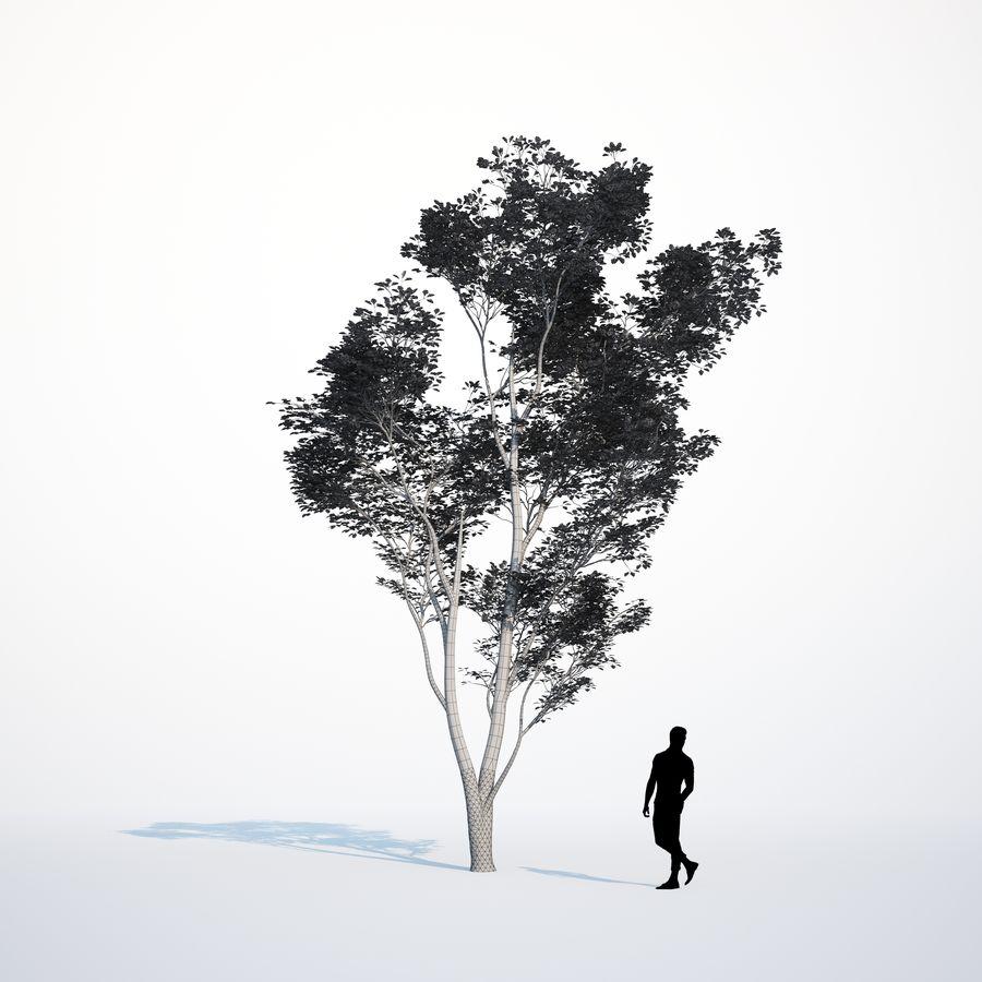 Harnbeam树(Carpinus Betulus)模型C. royalty-free 3d model - Preview no. 3