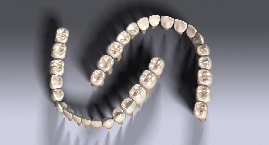 牙齿v2.0 royalty-free 3d model - Preview no. 11