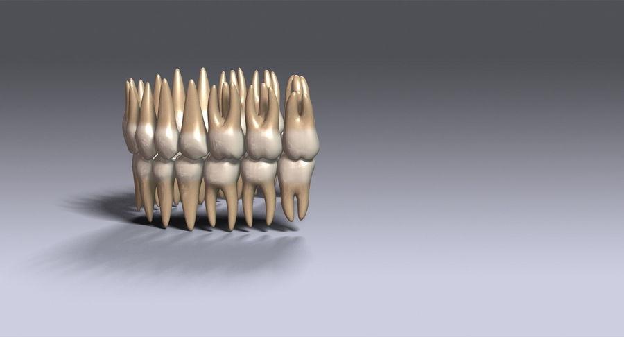 牙齿v2.0 royalty-free 3d model - Preview no. 10