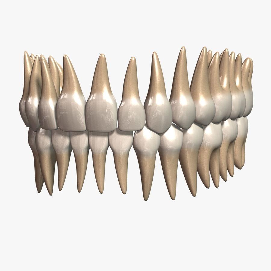 牙齿v2.0 royalty-free 3d model - Preview no. 1
