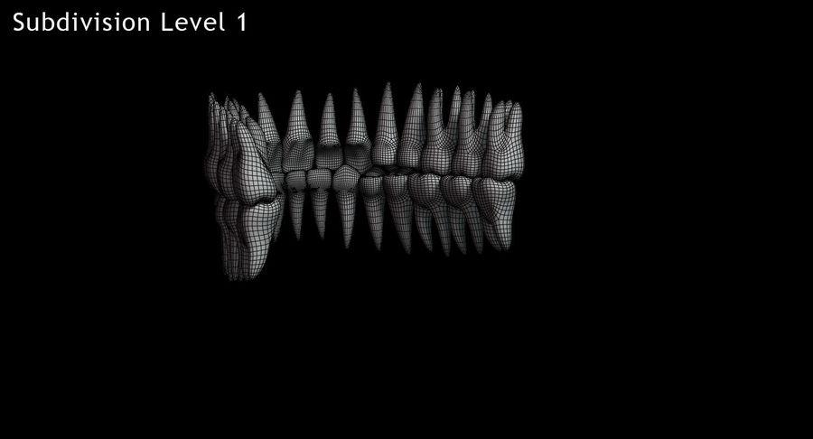 牙齿v2.0 royalty-free 3d model - Preview no. 15