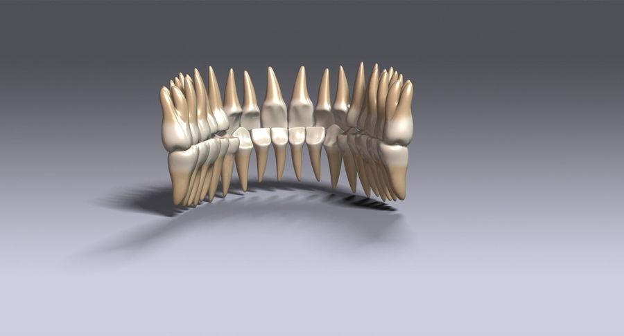 牙齿v2.0 royalty-free 3d model - Preview no. 8