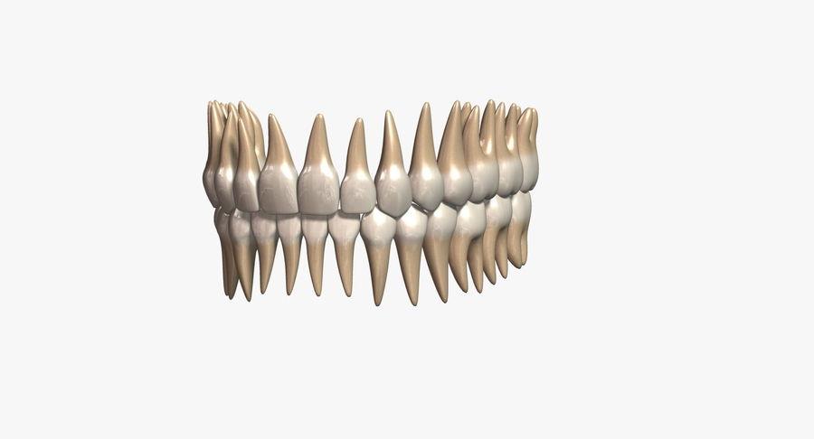 牙齿v2.0 royalty-free 3d model - Preview no. 2