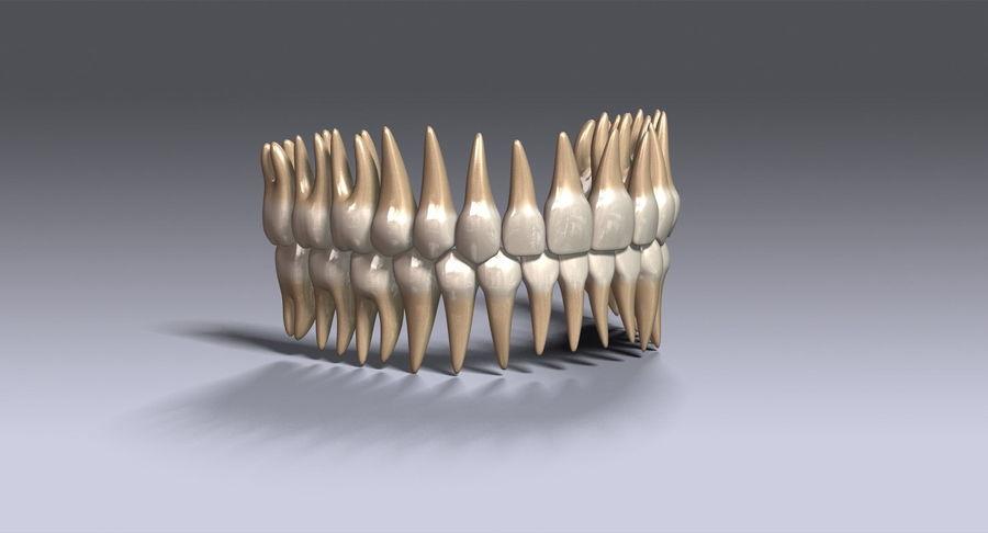牙齿v2.0 royalty-free 3d model - Preview no. 5