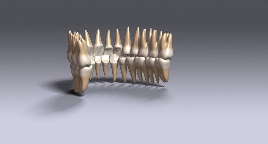 牙齿v2.0 royalty-free 3d model - Preview no. 9