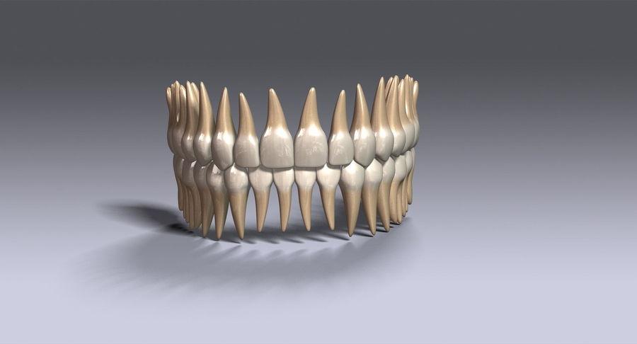 牙齿v2.0 royalty-free 3d model - Preview no. 4