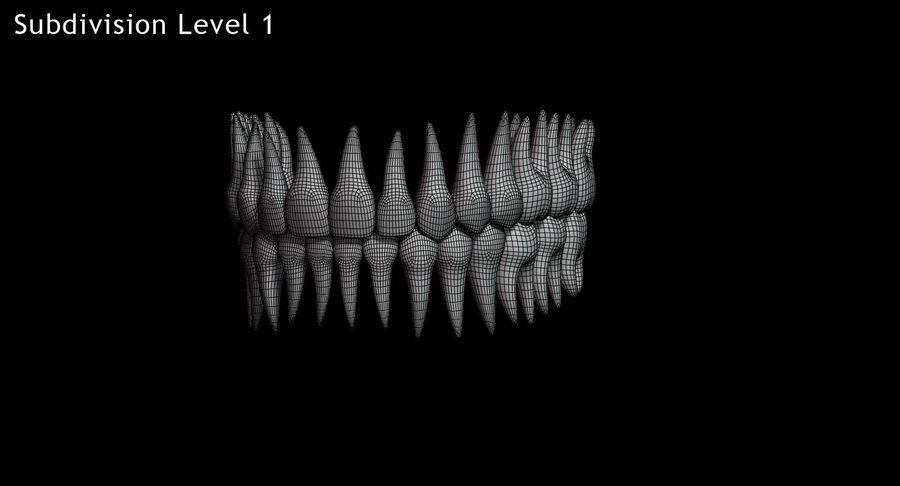 牙齿v2.0 royalty-free 3d model - Preview no. 13