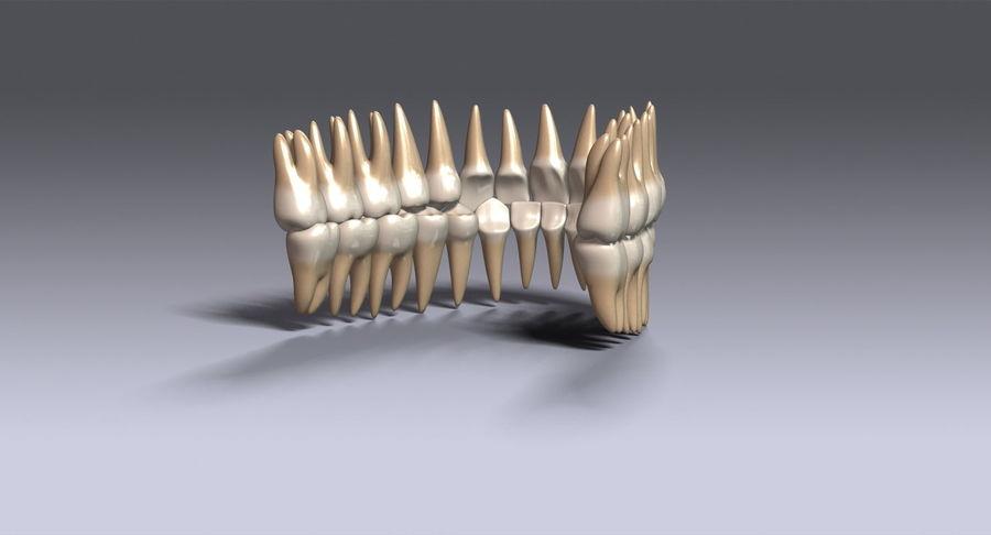 牙齿v2.0 royalty-free 3d model - Preview no. 7