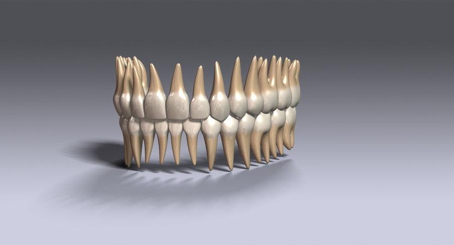 牙齿v2.0 royalty-free 3d model - Preview no. 3
