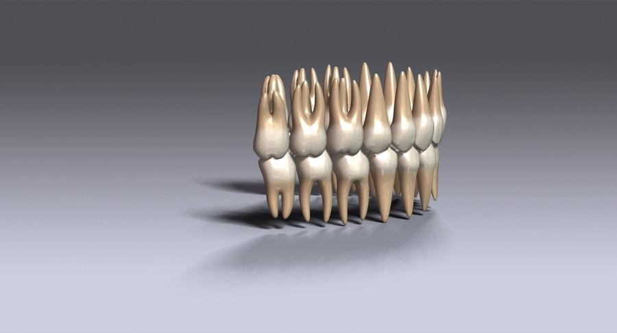 牙齿v2.0 royalty-free 3d model - Preview no. 6