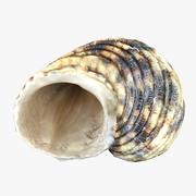 贝壳(1) 3d model